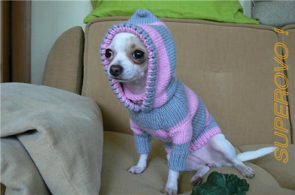 вязаная одежда для собак в гомеле и по рб беларусь гомель